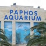 akvarium-pafosa-na-kipre