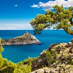 Pine on the cliff, sea, Crimea