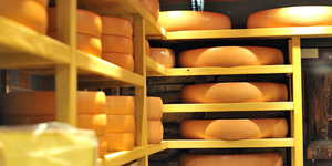 Round stacks of cheese stored
