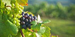 Игристые вина Испании