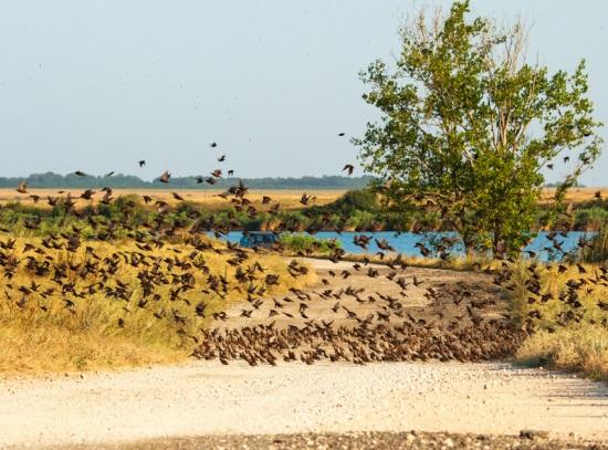 Дуранкулак, птицы вблизи курорта