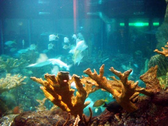 Подвоная флора океанариума в Адлере