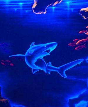 Акула в океанариуме Адлера