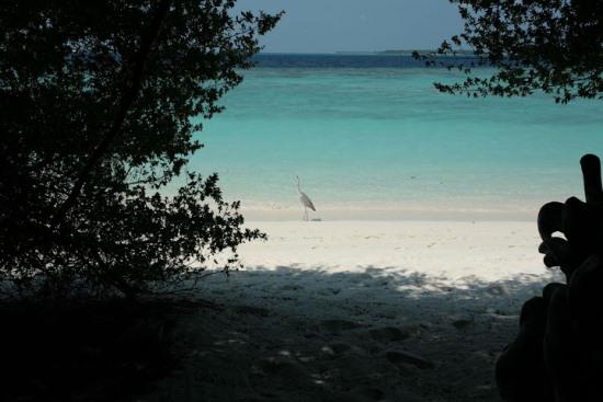 Атолл Баа на Мальдивах