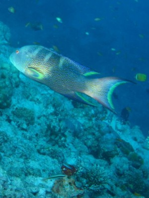 Подводный мир атолла Баа на Мальдивах