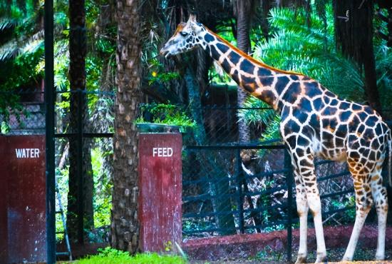 Зоопарк Нью-Дели